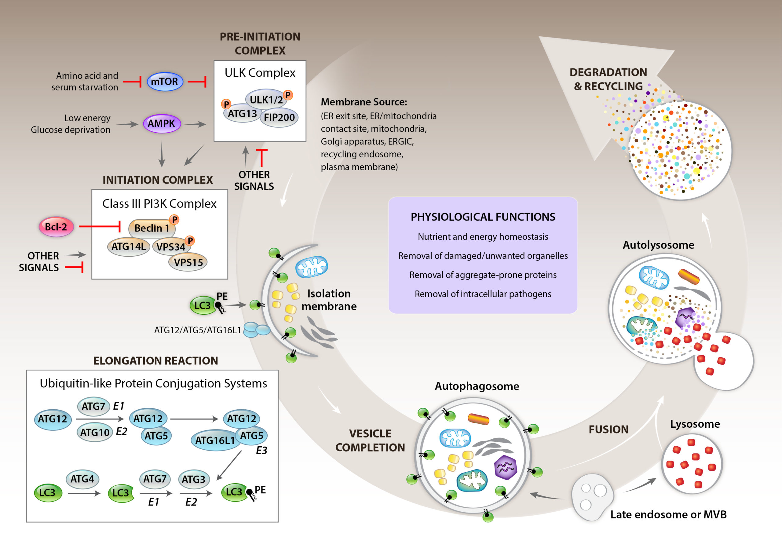 Cell Review 2014