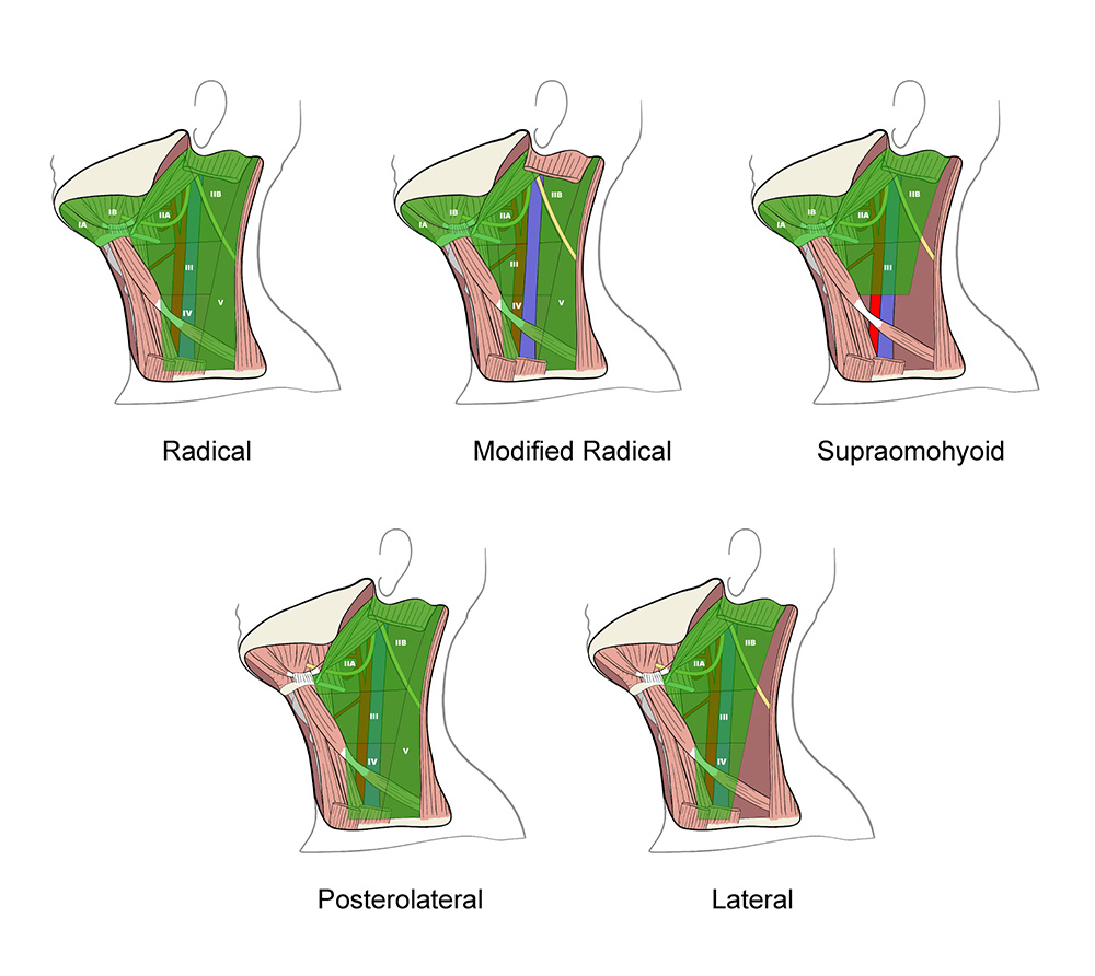 Anatomical Structures of the Neck – Angela Diehl